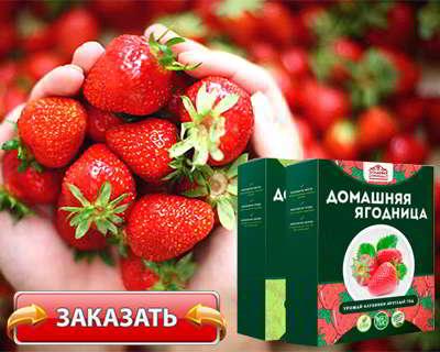 Домашняя ягодница купить