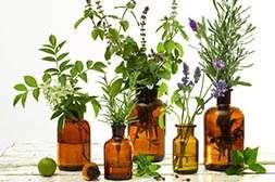 Препарат Оторин состоит из растительных компонентов