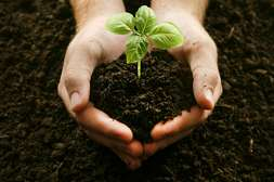 AgroUp подходит для всех сельскохозяйственных культур.