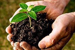 Состав Агрохелса объединяет в себе все существующие удобрения.